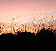 Sunset Through Beach Grass by Annie Underwood
