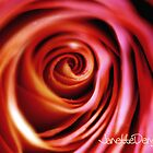 Eye of the rose by Janette  Dengo