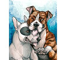 Bull Buddies Photographic Print