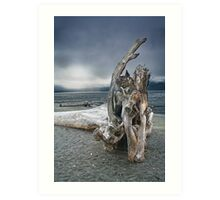 Driftwood on Vancouver Island Art Print
