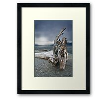 Driftwood on Vancouver Island Framed Print