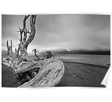 Black and White Photo of Driftwood on Vancouver Island Poster