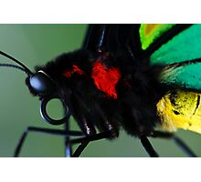 Cairns Birdwing II Photographic Print