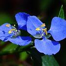 Pretty Cobalt Blue! by Gabrielle  Lees