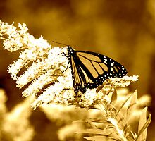 Southward Migration -Monarch Butterfly by CassandraLaine