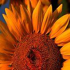 """""""SUNRISE"""" - Follow The Sun by jules572"""