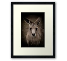 Tasmanian (or rufous bellied) pademelon Framed Print