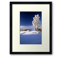 Frosted trees in January Framed Print