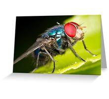 Bluebottle Greeting Card