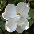 Magnolia No 7 by eruthart