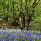 Another bluebell wood by Christopher Cullen