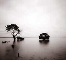 Mangrove by Caroline Gorka