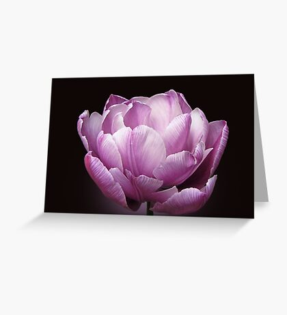 """Tulip """"Blue Diamond"""" Greeting Card"""