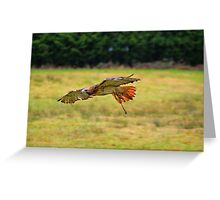 Leah ~ Red-Tailed Hawk Greeting Card