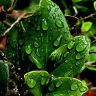 Little green wet piece of nature. by queenxtc