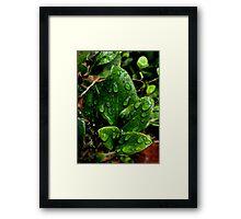 Little green wet piece of nature. Framed Print