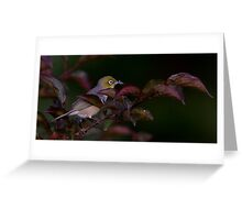 Graybacked Silver Eye with Dinner Greeting Card