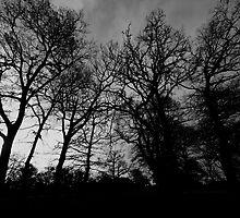 The dark side beckons... by marc melander
