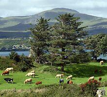 Irish island meadow by morrbyte
