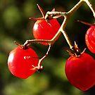 Cherry Tomato! by Cleetus