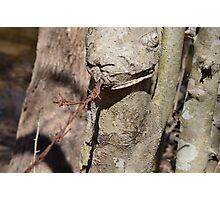 Barbwire Lizard Photographic Print