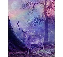 Forest Fantasy Photographic Print