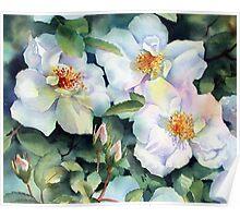 Nevada Rose Poster