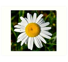 One bright daisy Art Print