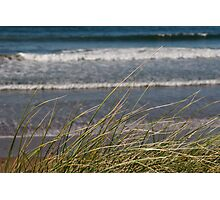 long dune grass Photographic Print