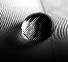 A drop on a feather, bw by JuliaPaa