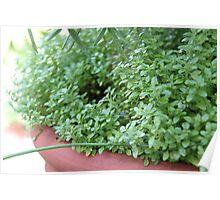 Spring - Fresh Green Leaves Poster