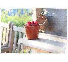 Freshly Picked Red Raspberries Poster