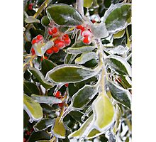 Holly Ice Tree Photographic Print