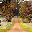 Country road take me home by Clive