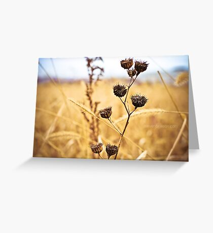 Faith is like a kernel of wheat. Greeting Card
