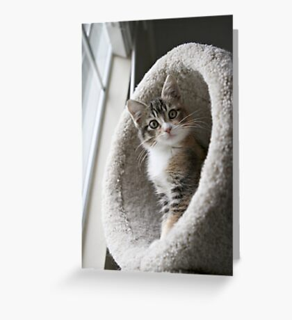 """""""You want me to look cute? How's this""""? Greeting Card"""