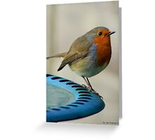 robin redbreast on the edge Greeting Card