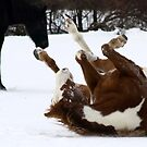 Rollin' in Snow by Barbara Gerstner