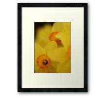 Bursting Daffodils Framed Print