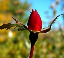 Rosebud by Sharon Woerner