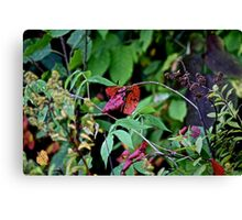 red leafed Canvas Print