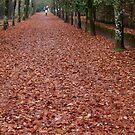 red carpet running by FotosdaMau