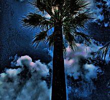 Palm in the Moonlight by Brenda Boisvert