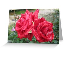 'RAINDROPS ON ROSES!' Red Cardinal standard. Greeting Card
