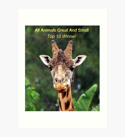 all animals great and small challange Art Print