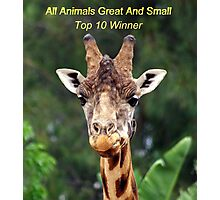 all animals great and small challange Photographic Print
