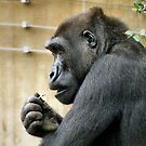 Gorilla Pick by SuddenJim