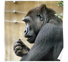 Gorilla Pick Poster