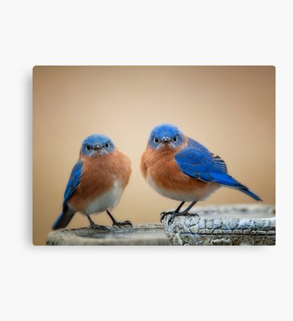 Grumpy Little Men Canvas Print