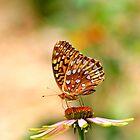 Delicate Color by Warren Brown